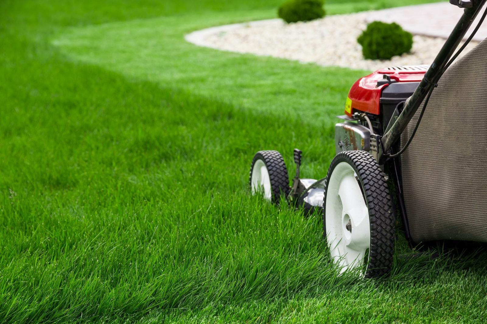 Jak prawidłowo kosić trawę?